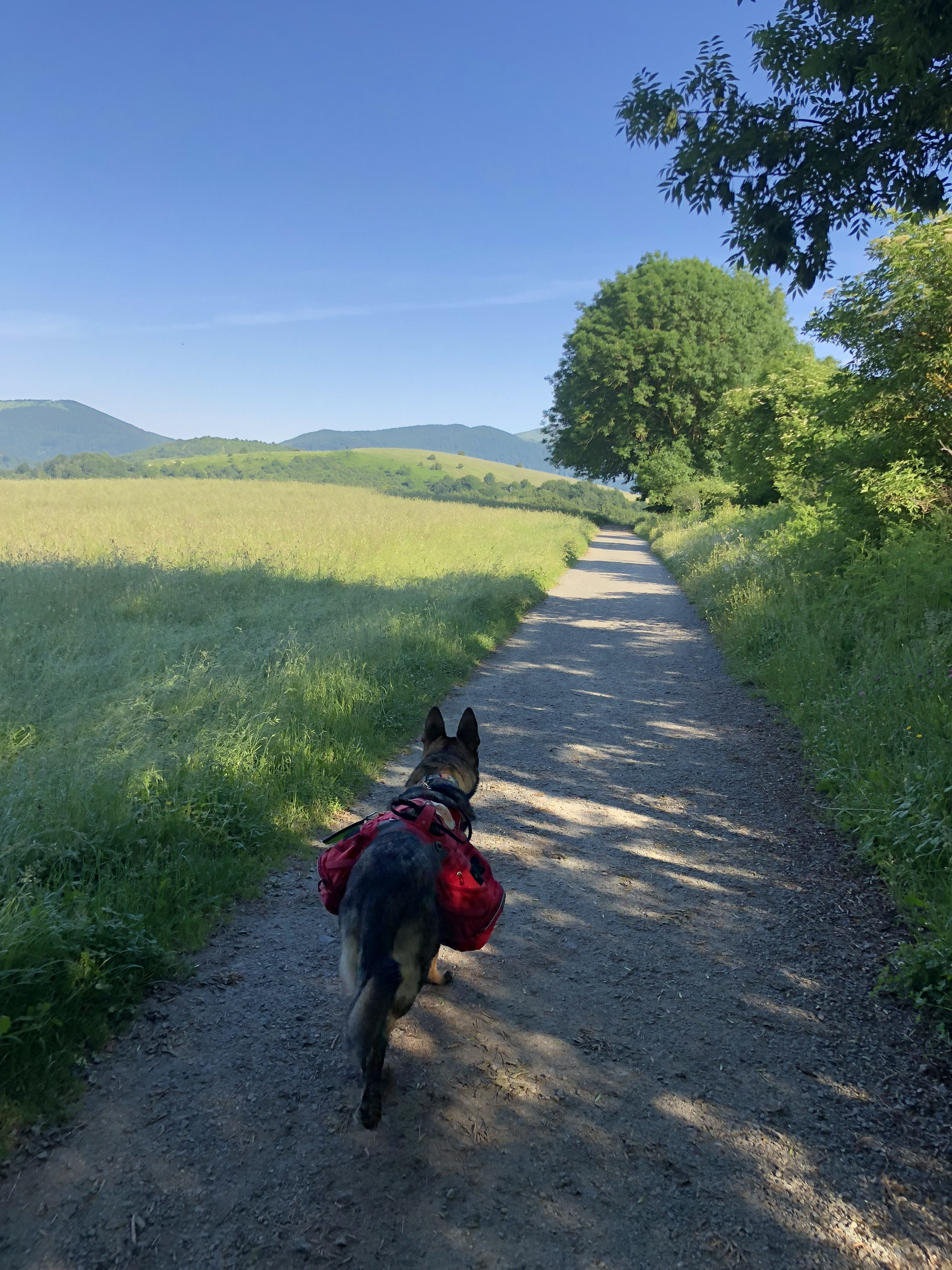 Day 2 – Roncesvalles to Zubiri